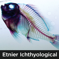 Etnier Ichthyological Collection (UTEIC)